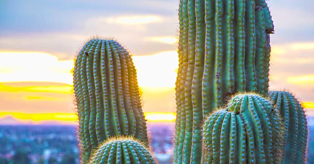 Charter bus rentals Phoenix Arizona